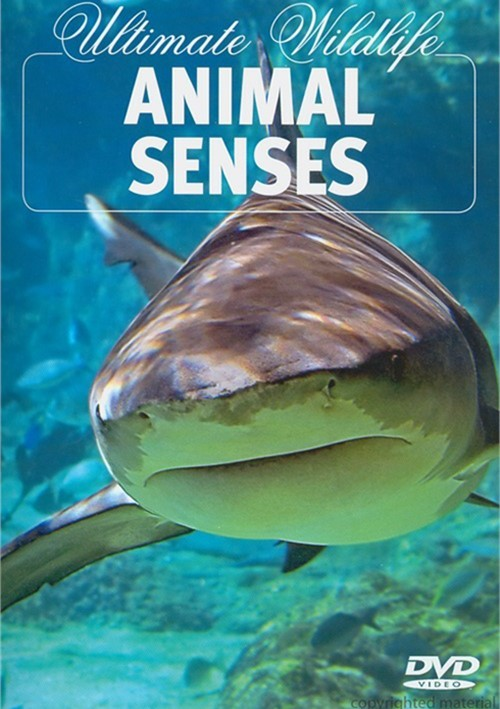 Ultimate Wildlife: Animal Senses Movie