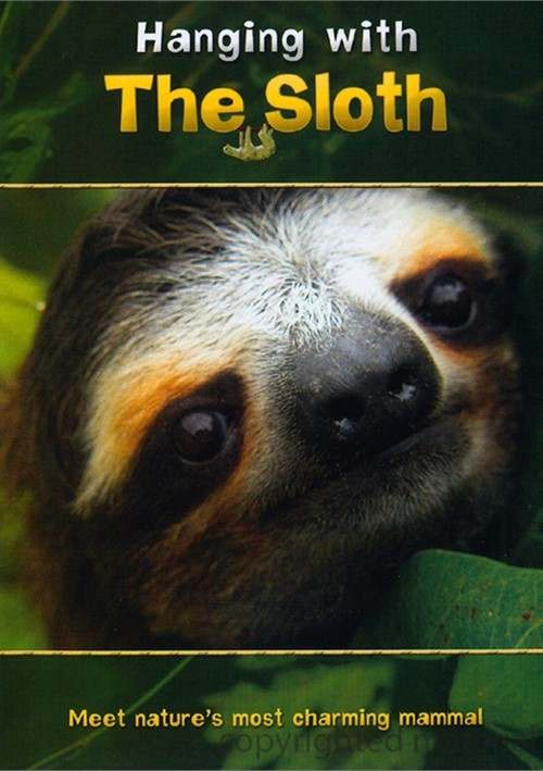Hanging With The Sloth Movie