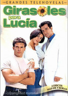 Girasoles Para Lucia