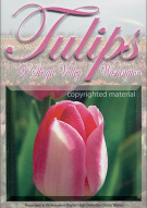 Discoveries America: Tulips Of Skagit Valley, Washington - Special Edition