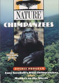 Nature Chimpanzees