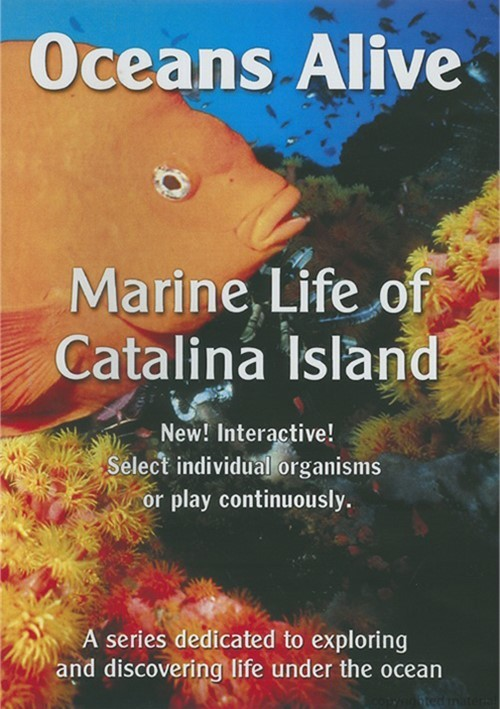 Oceans Alive: Marine Life Of Catalina Island