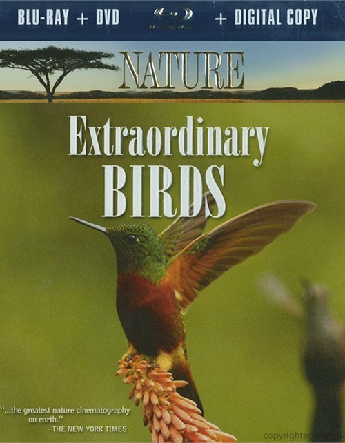 Extraordinary Birds (Blu-ray + DVD + Digital Copy)