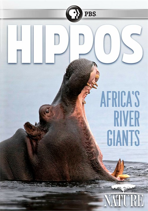 NATURE: Hippos: Africas River Giants
